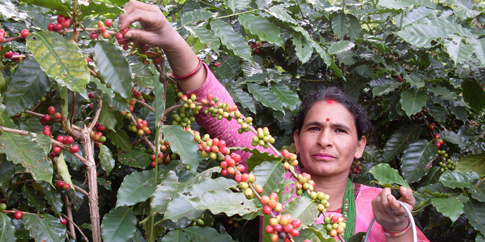 Handelspartner CCU Lalitpur, Nepal